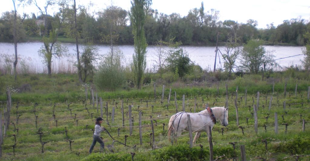 Cheval blanc du Château Condat