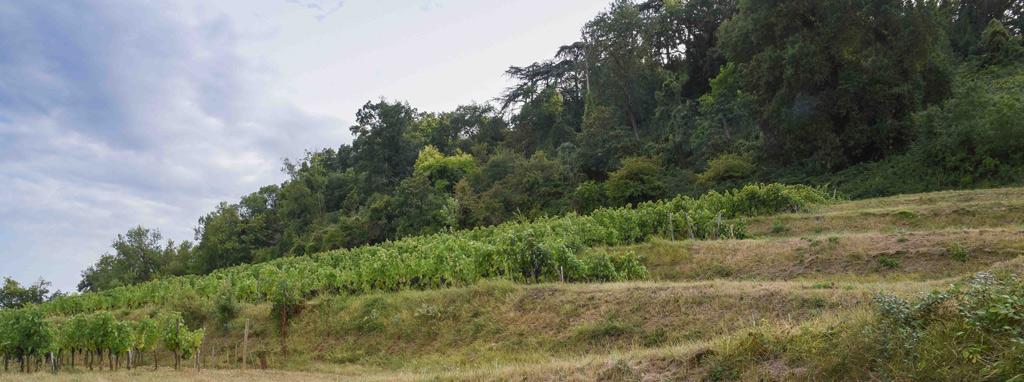 Vins naturels François Janoueix